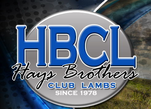 Hays Brothers Club Lambs